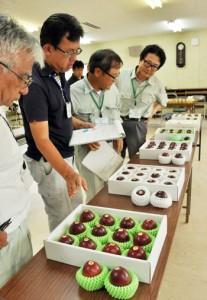 果皮の色など外観を見比べる審査員=6日、奄美市名瀬の県農業開発センター