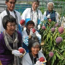紅色に熟したマンゴーを手に収穫を祝う関係者ら=20日、徳之島町