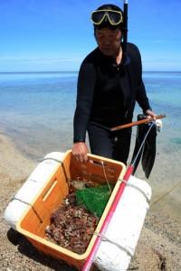 解禁になったものの、シラヒゲウニの数が少なく、早々と漁を切り上げた安木屋場集落の住民=1日、龍郷町
