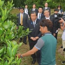 果樹園を視察し、農家と意見交換する森山農水大臣(中央)=15日、奄美市名瀬
