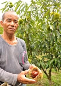 収穫したクリを手に喜ぶ久岡さん。6年目の木には直径11~12㌢のイガが実る=16日、龍郷町久場