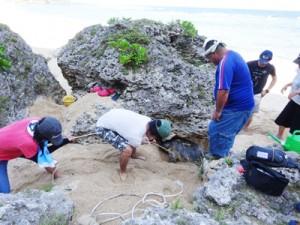 ウミガメ救出作戦を展開する島キャン生ら=14日、和泊町与和浜(提供写真)