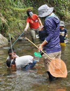 水中メガネや網を持って川に入る親子=8日、奄美市住用町の川内川