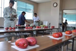 沖永良部島内の生産者から22点出品されたマンゴー品評会=3日、和泊町防災センター