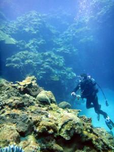 ★喜界島でサンゴ礁シンポジウム写真(調査) 丸山
