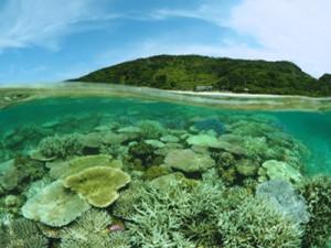 サンゴの白化現象が確認された大浜海岸のリーフ内=1日、興克樹さん撮影