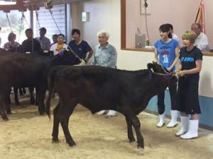 子牛競り市を訪れ、農業や畜産など島を支える1次産業についても理解を深めたボランティア参加者(写真右側の2人)(佐手久青年団提供)