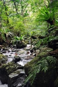 奄美群島国立公園の指定が見込まれる奄美大島の森