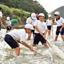 リュウキュウアユが産卵しやすいように川底を整える児童ら=18日、奄美市住用町の役勝川