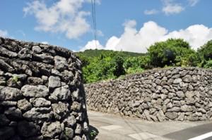 喜界町阿伝集落に残るサンゴ石垣の景観