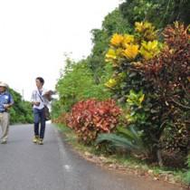 奄美世界自然遺産トレイルの候補地を歩く現地歩き・ワークショップ参加者=28日、知名町