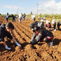 球根を植え付ける作業参加者=16日、和泊町