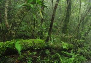 「日本の貴重なコケの森」に認定された湯湾岳の山頂付近