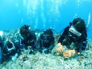 サンゴ株を植え付けるダイバー=5日、知名町屋子母海岸沖(沖永良部島ダイビング協会提供)