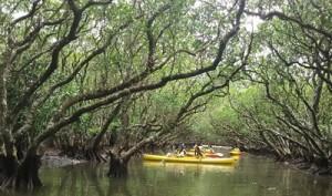 世界自然遺産登録を見据え、今後、利用者の増加が見込まれる奄美大島の体験型観光(資料写真)