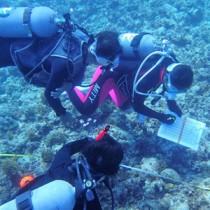 サンゴ礁の状況など調べるダイバー=12日、与論町供利沖(提供写真)