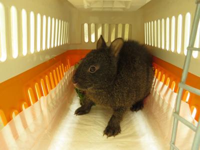 アマミノクロウサギの画像 p1_14