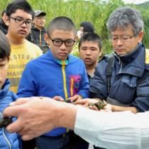 浅瀬の石に付着したリュウキュウアユの卵を観察する参加者=18日、宇検村石良の河内川