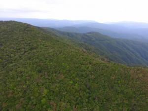 希少な動植物を育み、国立公園に指定される照葉樹の森=奄美大島の湯湾岳周辺