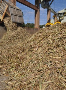 製糖シーズンが始まり工場に搬入される原料キビ=8日、徳之島町の南西糖業徳和瀬工場