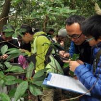 スマートフォンのデジタル図鑑を片手に植物の名前を探す参加者=24日、龍郷町の奄美自然観察の森