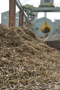 製糖開始から1カ月が経過した工場。降雨による搬入量不足で一部操業を停止した=8日、伊仙町の南西糖業伊仙工場