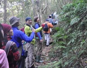 奄美の森の植物を観察する参加者=2日、湯湾岳