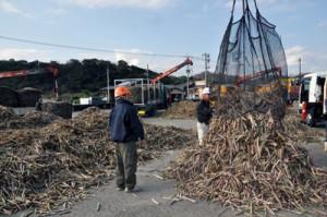 富国製糖で始まった今期サトウキビの原料搬入作業=10日、奄美市笠利町