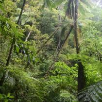 固有の動植物が生息・生育する金作原林道を散策し、自然体験を楽しむエコツアー=奄美市名瀬