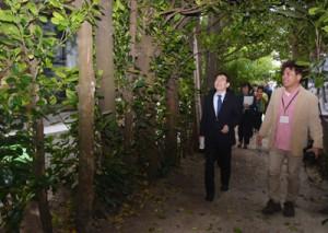 国直集落のフクギ並木を視察する奄美群島振興開発審議会の委員ら=1日、大和村