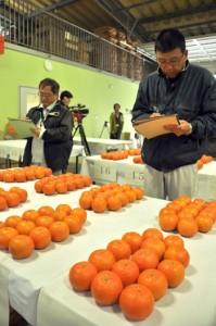 2年ぶりの開催で果実76点が出品された奄美群島たんかん品評会=9日、奄美市名瀬の奄美大島選果場