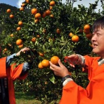 2年ぶりのはさみ入れ式で収穫シーズンの始まりを祝う園主の武富さん(右)と岡山部会長=1日、瀬戸内町阿木名