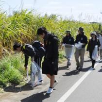 約350人が参加した「ボランティア清掃大作戦」=19日、伊仙町