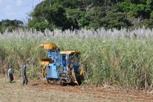 ハーベスターによるサトウキビの収穫作業=1月、知名町大山