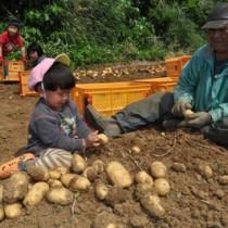 バレイショの掘り取り作業に精出す家族=30日、知名町瀬利覚