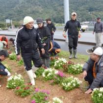協力して花苗を植え付ける参加者=1日、瀬戸内町久慈