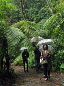 国立公園に指定された奄美群島の自然に触れる観光客=18日、奄美市名瀬の金作原原生林