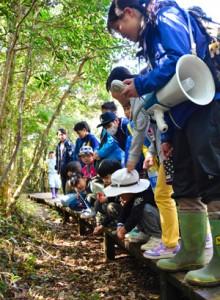 湯湾岳フィールドワークで植物の説明を受ける児童生徒ら=4日、湯湾岳の大和村側登山道