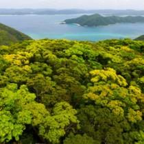 奄美の春を彩る新緑の森=15日、龍郷町の奄美自然観察の森(本社小型無人機で撮影)