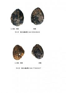 半川遺跡から出土した1万1200年前のシイの実(提供写真)
