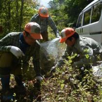 外来植物ムラサキカッコウアザミの除去作業を行う奄美マングースバスターズのメンバーら=28日、奄美市住用町の奄美中央林道