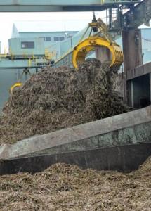2016~17年期の原料キビ搬入を終えた南西糖業の伊仙工場=17日、伊仙町