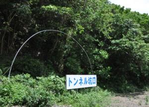 今夏にも掘削工事が始まる宮古崎トンネルの国直側坑口=大和村