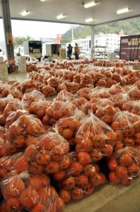 豊作で持ち込み量が急増し、過去最多の437㌧に達したタンカン=2月中旬、奄美市の名瀬中央青果