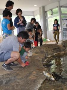 子どもたちに人気のウミガメへの餌やり体験=6日、奄美海洋展示館