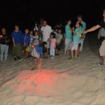 ウミガメの上陸跡と産卵巣を観察した参加者ら=13日、奄美市名瀬の大浜海岸
