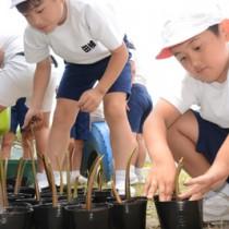 メヒルギの苗作りを体験する田検小の児童ら=23日、宇検村