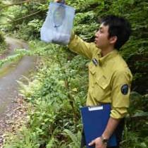樹上に仕掛けられた昆虫トラップを確認する環境省の職員=22日、奄美市住用町
