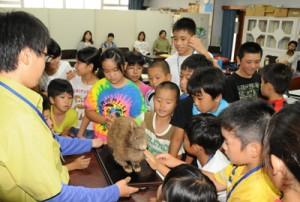 アマミノクロウサギの剥製に触れる子どもたち=11日、瀬戸内町