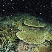 夜の海を神秘的な雰囲気で包むサンゴの産卵=14日午後11時ごろ、奄美市名瀬の大浜海岸で興克樹さん撮影